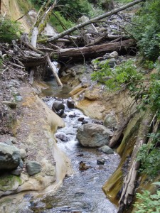 Fifteen Mile Creek Stream Bed